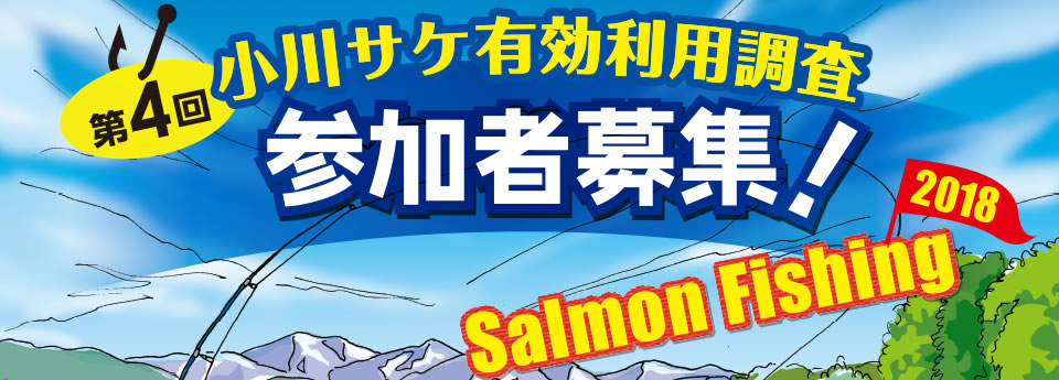 朝日町 小川サケ有効利用調査 の様子